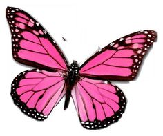 24 X Pink Veined Butterfly Edible Cupcake Toppers Cake Rice Paper B2