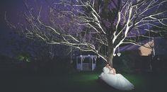 Bride Groom tree night wedding photography Wedding Night, Our Wedding, Night Wedding Photography, Bride Groom, Wedding Dresses, Bride Dresses, Bridal Gowns, Honeymoon Night