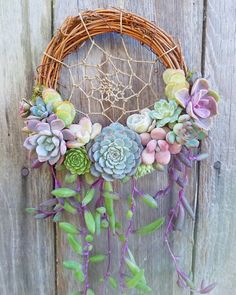 "via @jenssuccs on Instagram: ""Succulent dream catcher! Clear my schedule, all I wanna do is make a million more of these!…"" Grapevine Wreath, Grape Vines, Tao, Wreaths, Photo And Video, Videos, Instagram Posts, Home Decor, Homemade Home Decor"