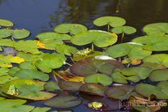 Flora y fauna del estanque | Flickr: Intercambio de fotos