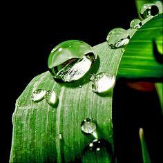 macro green and black