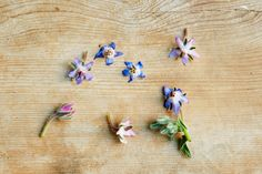 All About the Herb Borage