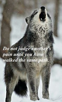 Regrann from - wolf wolfquote wolfquotes celticwolf wolfman wolfstagram wolflover wolfpack wolfspirit wolflove instawolf wolfie teenwolfzodiac celticmythology celticanimals celticanimalzodiac wolfy bigwolfy - regrann Wisdom Quotes, True Quotes, Great Quotes, Inspirational Quotes, Motivational, Wolf Qoutes, Lone Wolf Quotes, Beautiful Wolves, Animals Beautiful