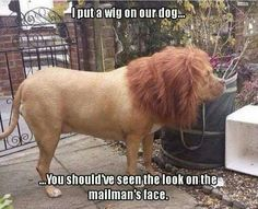 This is quite convincing! I wonder how many concerned calls the local zoo received?! #funny #dogs #doglovers