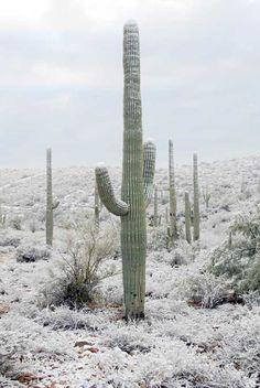 Rare snowfall in Tucson, AZ