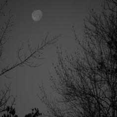 Moon by kelliclark