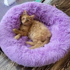 A cat's life is soooo hard ... #mewow #catcafe #doylestownkitties #cat #cats #catsandcoffee #mewowcatcafe #lovecats #lifewithcats #catsarethebest #cutecatpics #catpicoftheday #kitten #kittens #adoptacat #catadoption #adoptdontshop Instagram News, Cat Cafe, Kittens, Cats, Shag Rug, Adoption, Life, Animals, Cute Kittens