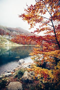 { longing for autumn }