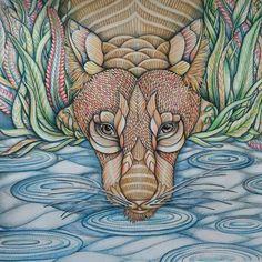 """""""Já desejando o novo livro de colorir da Millie Marotta """"Wild Savannah"""", ainda mais com esse belo colorido como inspiração!!!!! @Regrann from @munkymandi -…"""""""