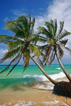 Palm trees on the beach, Little Corn Island, Nicaragua