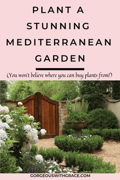 Gardening With Containers Mediterranean Landscape Plants - A Mediterranean Garden is wonderful if you live in a hot and sunny climate. You can almost imagine the smell of lemons and lavender. Backyard Plants, Landscaping Plants, Front Yard Landscaping, Garden Plants, Landscaping Ideas, Landscaping Borders, Succulent Landscaping, Dry Garden, Mediterranean Garden Design