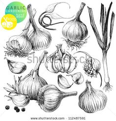 Collection of hand drawn illustrations with garlic's isolated on white background by Shlapak Liliya, via Shutterstock
