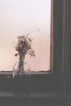 something on a window still