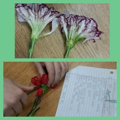 Flower dissection Carnations make a great patient when learning the parts of a flower Vanessa Dulock - Hydroponic Strawberries, Teaching Methods, Teaching Ideas, Parts Of A Flower, Plant Science, Tropical Fruits, The Thing Is, Growing Plants, Carnations