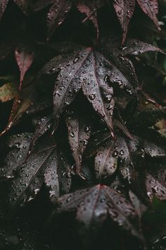 Leaves by Kelly Smith Photography