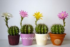 Planter Pots, Clay, Facebook, Flowers, Clays, Royal Icing Flowers, Flower, Florals, Modeling Dough