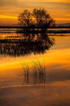 Golden Pond. #peace