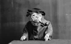 Vintage-Dog-1.jpg 808×500 pixels