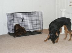 "Changing Dog Behavior Through the ""Sniff That"" Method"