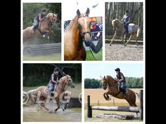 15.3 Partbred Competition Gelding for sale | HorseDeals.co.uk