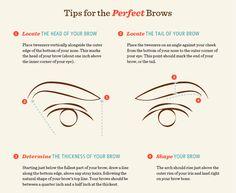 Learn brow terminology.