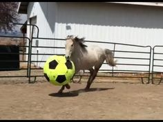 ▶ Horses Playing With Balls Compilation - YouTube