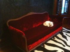 couch (red velvet recovered antique), cat, wall (charcoal venetian plaster), rug (wool & cotton blend)