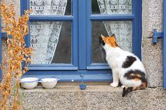 """* * """" Dey gives meez food ands water, buts nevers think of  spayin' or neuterin' meez. OR givin' meez a home!"""""""