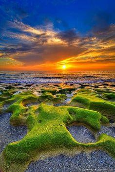 The mossy rocks of Jupiter Beach