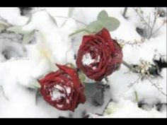 When The Snow Is On The Roses - Sonny James classic! #1 in 1972, played on the 9/12/13 edition of The Ultimate Twang Show.