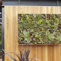 Absolutely loving this succulent art! Perfect to hang outside a window on a ugly or bare fence/wall.