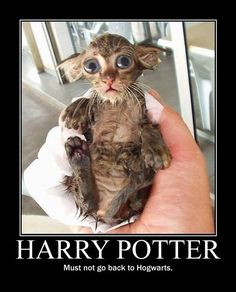 @Emily Ernest this is the pin i tried to send you. :( Dobby?! - funny pictures - funny photos - funny images - funny pics - funny quotes - funny animals @ humor