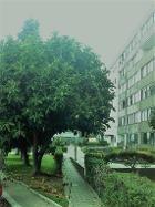 Apartamento T1 Matosinhos - Apartamento T1.1 Garagem arrumo Matosinhos Real Estate Broker, Multi Story Building, 1, Plants, Carport Garage, Houses, Apartments, Plant, Planets