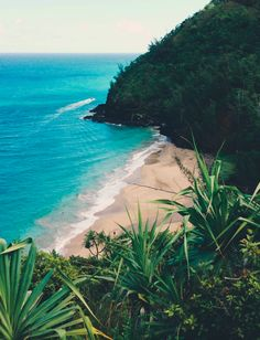 Not sure where this tropical paradise is, but the blue water and green plants are a gorgeous combination.