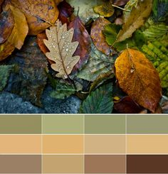 My favorite colors always fall into the fall/winter category. This photograph of fall leaves was my inspiration to create this palette. Autumn Day, Autumn Leaves, Autumn Inspiration, Color Inspiration, Gray Garden, Foto Macro, Seasons Of The Year, Fall Season, Belle Photo