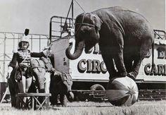 Siebrand Bros. Circus and Carnival #8