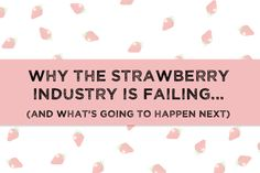 The strawberry industry boomed with the introduction of new techniques and pesticides. Read a summary of that history and a prediction for what will happen next.