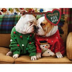 The major breeds of bulldogs are English bulldog, American bulldog, and French bulldog. The bulldog has a broad shoulder which matches with the head. Cute Puppies, Cute Dogs, Dogs And Puppies, Terrier Puppies, Doggies, Boston Terrier, Corgi Puppies, Beagle, Funny Dogs