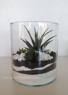 Succulently Urban - Black + white terrarium                                                                                                                                                     More