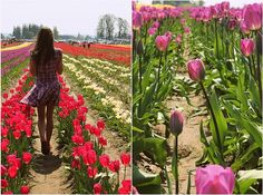 Tulip festival in Oregan thanks to Vintagepretty
