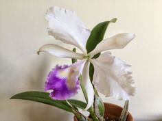 image.jpg - Orchid Forum by The Orchid Source