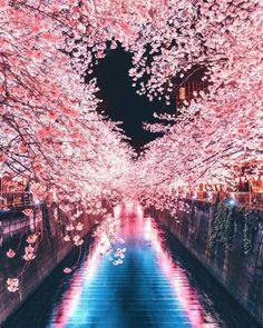 Explore wonderful places in Tokyo ▶️ lovely spring cherry blossom coming to an end here in Tokyo! Hope you all had a wonderful experience! Beautiful World, Beautiful Places, Beautiful Pictures, Wonderful Places, Nature Pictures, Places In Tokyo, Cherry Blossom Japan, Japanese Cherry Blossoms, Japan Photo