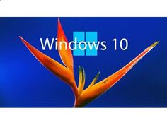 listing Windows Updates is published on Austree - Free Classifieds Ads from all around Australia - www.austree.com.a...