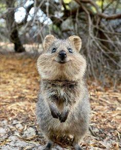 22 Adorable Baby Animals That Will Melt Your Cold Heart Happy Animals, Cute Funny Animals, Animals And Pets, Cute Australian Animals, Tier Fotos, Mundo Animal, Animals Of The World, Animals Beautiful, Mammals