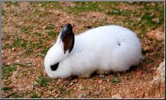 ses mon lapin en plus grand