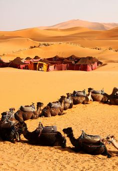 Camel Caravan   Sahara Desert, Morocco (see the tents in the background.  That's our campsite. Great adventyre