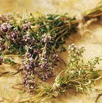 горичник, заготовка лекарственных трав, заготовка трав, левзея, лечение импотенции, лечение рака, лечение суставов, народное лечение рака, с...