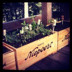 Hello from my wine box garden!