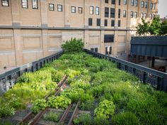 The plush greenery on the High Line in the Meatpacking District - around all the hustle and bustle.