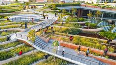 Biggest rooftop farm in Asia gets growing in Bangkok - Global Center on Adaptation Atrium Design, Urban Heat Island, Urban Agriculture, Land Use, Northern Thailand, Time Magazine, New Green, Extreme Weather, Building Design